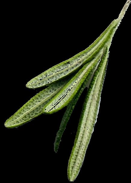 Zioło